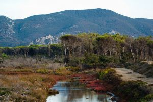 Click to enlarge image parco_maremma_10_thumb.jpg