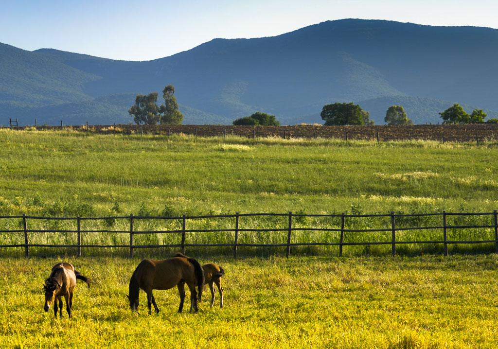 A cavallo nella campagna maremmana poggio cavallo for Ristorante della cabina di campagna